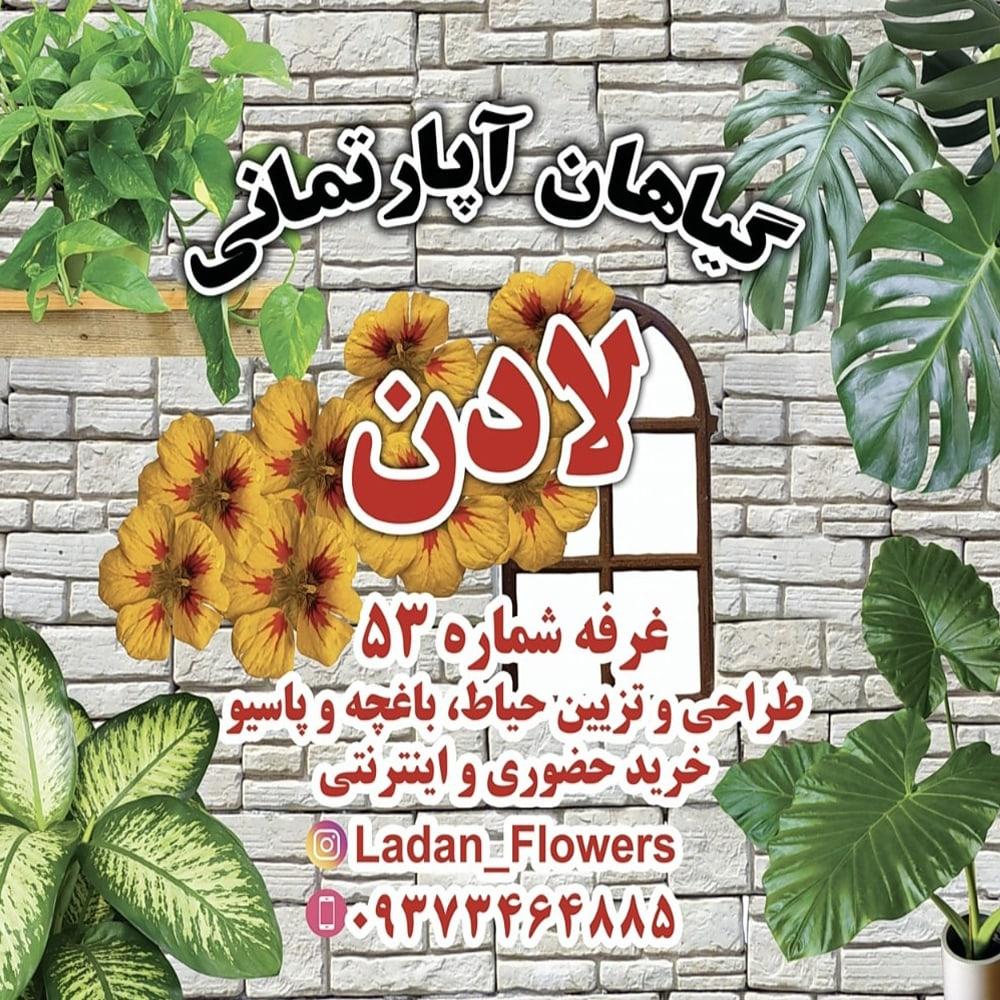 گیاهان آپارتمانی لادن
