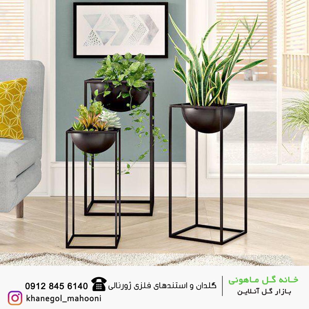 بازار گل و گیاهان آپارتمانی ماهونی